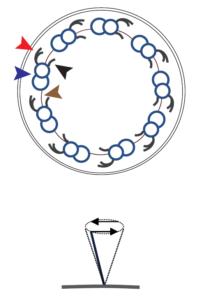 zilium primitivknoten